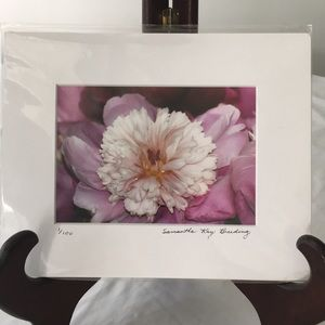 Pink Peony Photograph Signed & Numbered